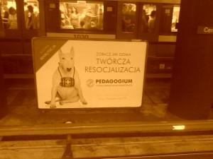 reklama Pedagogium